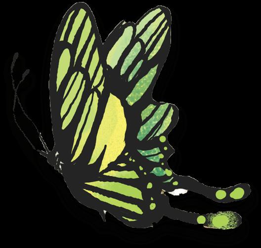 butterfly-2x